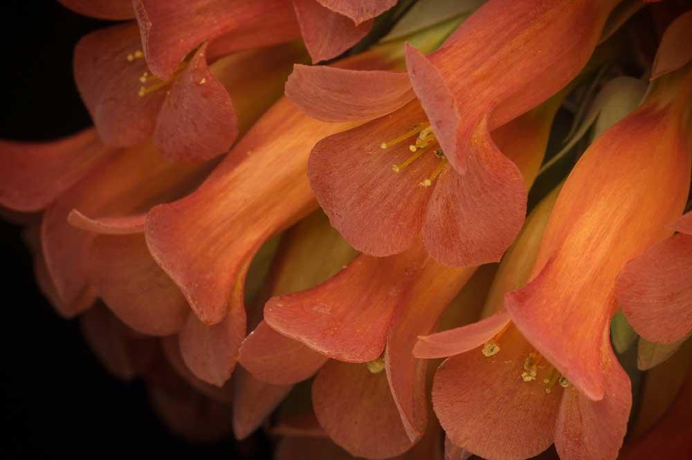flore de Madagascar